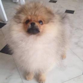 Bella Klein´s Joey 4 months