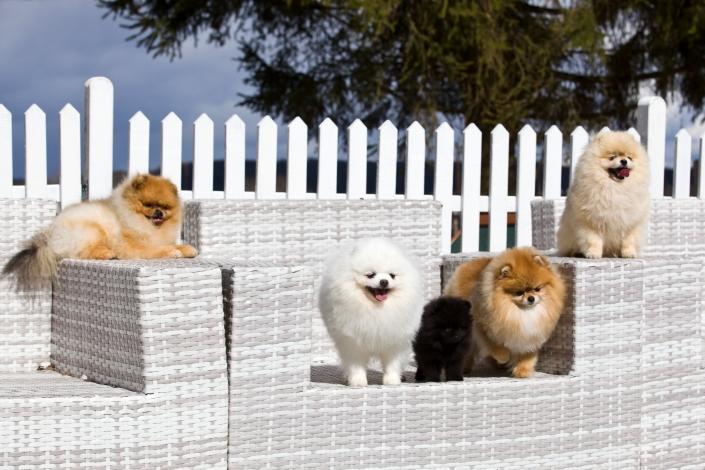 Toby, Willy, GIpsy, Bella, Marko