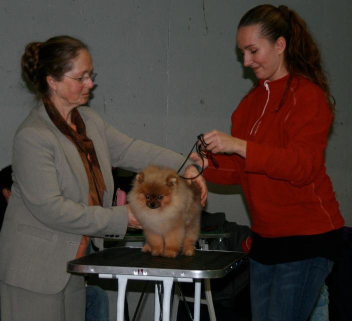 Pomeranian hundeutstilling