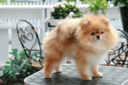 Bella Klein´s Puppy