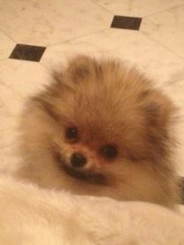 Bella Klein´s Joey 3 months