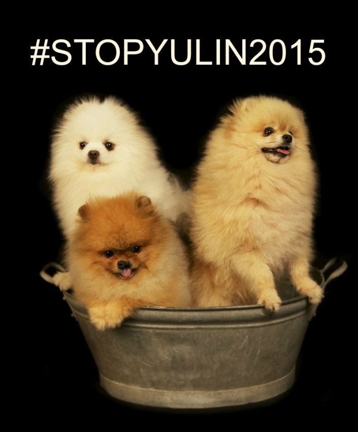 THE TERRIBLE YULIN DOG MEAT EATING FESTIVAL -